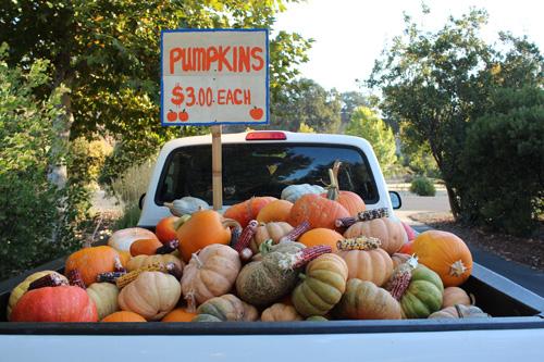 pumpkins-TVF-500.jpg