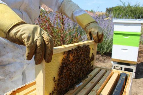 TVF-bees-honey-honeycomb-organic.jpg