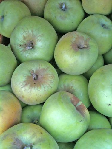 apples-500.jpg