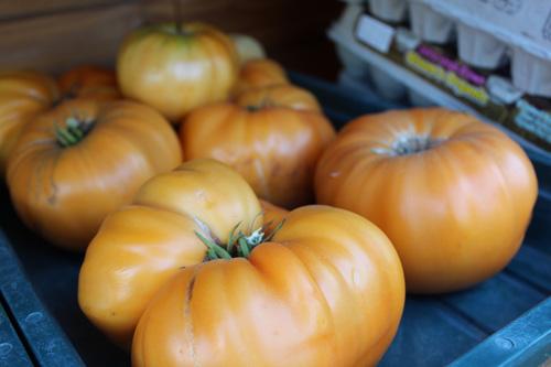 tomatoes-orange-50.jpg