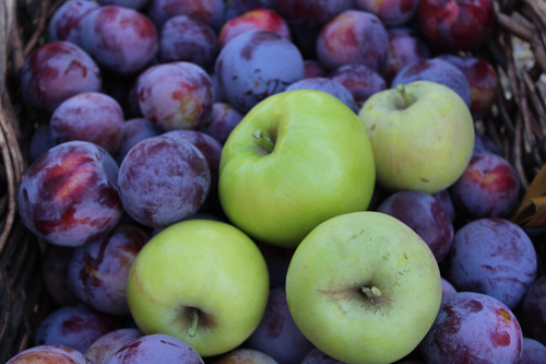 apples-plums-500.jpg