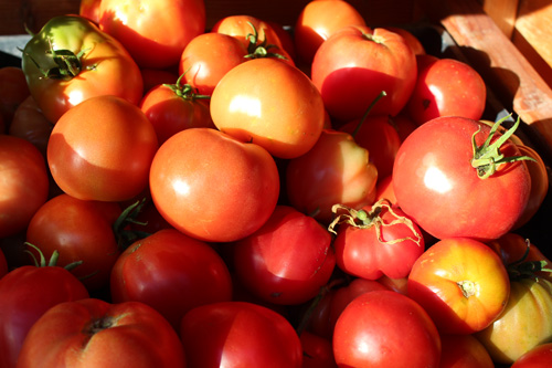 tomatoes-mixed.jpg