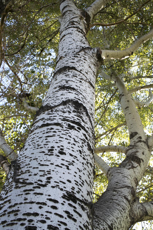 trees_03.jpg