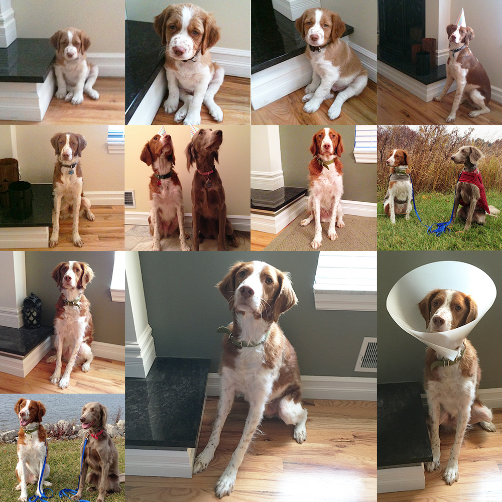 All Through The Good Times. Finnegan from 8-weeks (January 11, 2012) through birthday's 1-5.