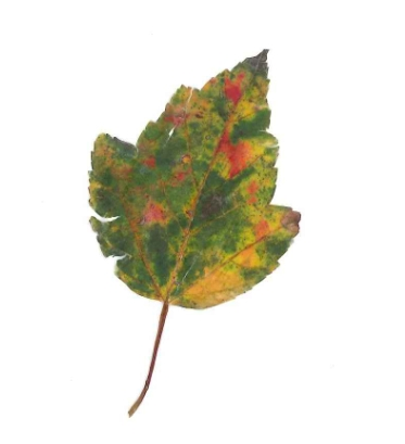 i found this leaf on the sidewalk today. couldn't be happier that fall is in the air. i have a little secret: it's my favorite time of year!   -a