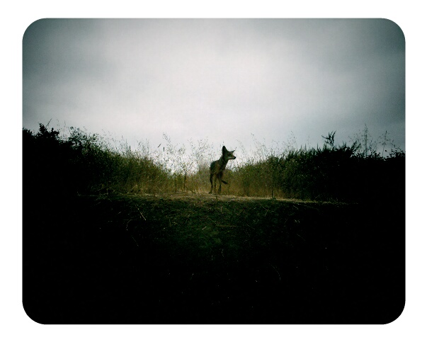hiking in griffith park. saw a little coyote.   -a