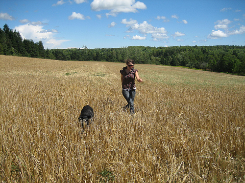 mid-summer 2006.  two of my favorite things:  this piece of land in caledonia, prince edward island, canada and soma, our family dog, an eleven year old black lab.  (by  christie maclean )   -c
