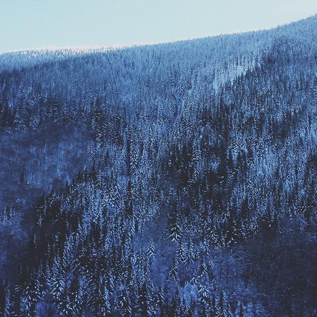 snow daze ❄️🌲