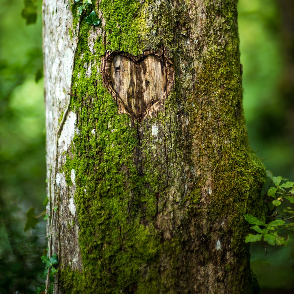 I don't like seeing people defile nature by carving their initials into a tree; however, this tree has aged significantly since it was carved with the heart, and the aging bark around it really contrasted nicely. I broke down and took the photograph.....