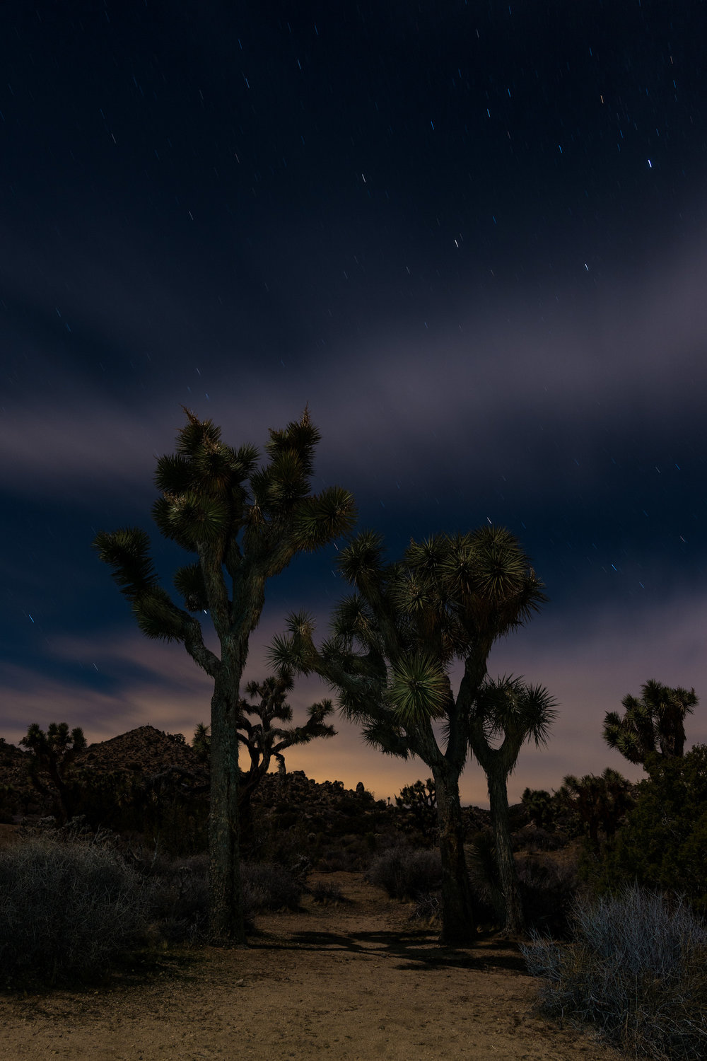 A 2 minute exposure of Joshua Tree National Park - that took 4 minutes to get.