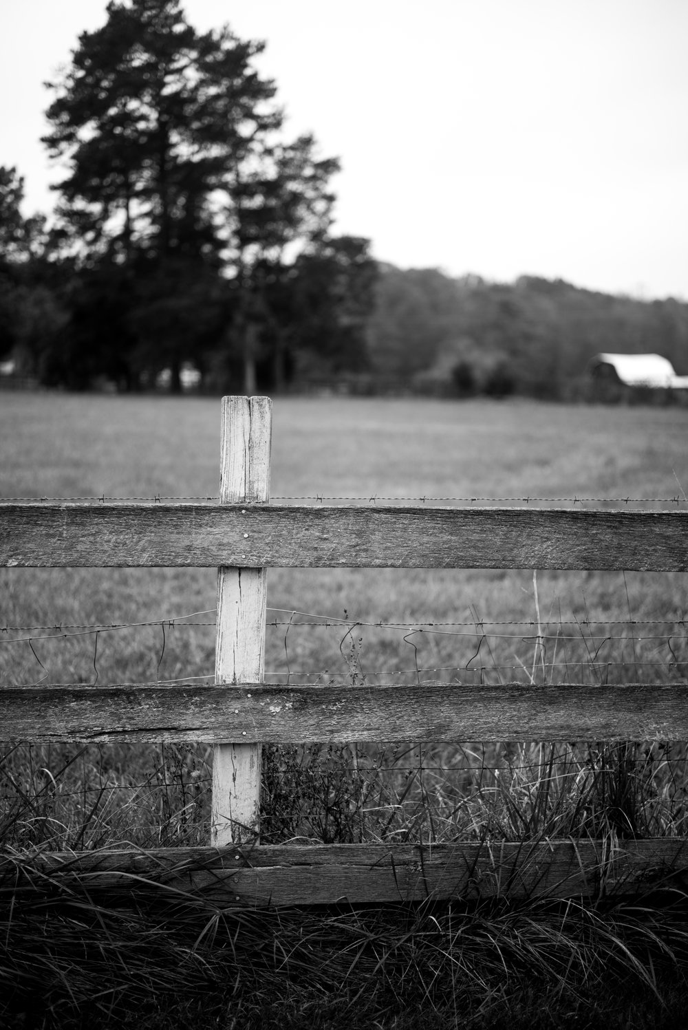 Looking over the fence toward the neighbor's farm