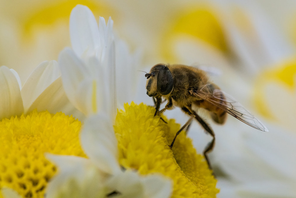 The super detail - eyes, pollen, and little hairs - are only possible from an accurately calibrated lens.