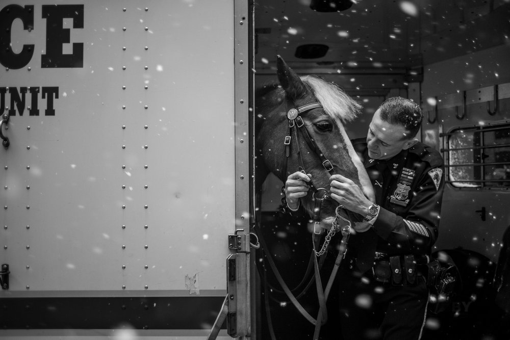 A New York City Police Officer prepares this police horse for a ride in the snow