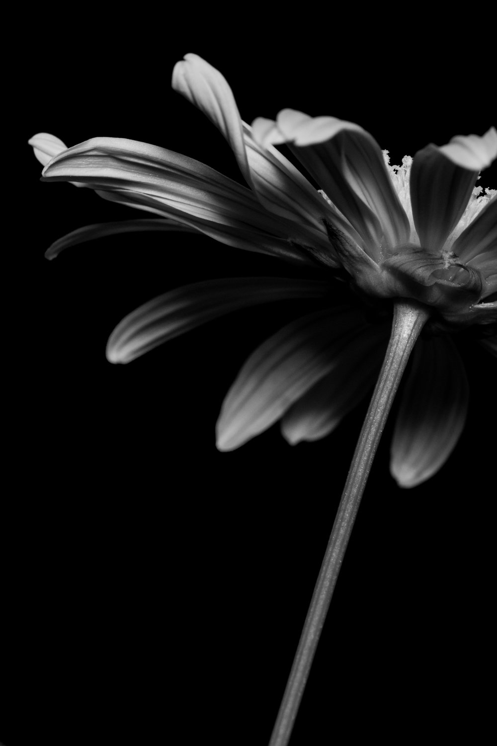 Black White Flower Silhouettes Scenic Traverse Photography