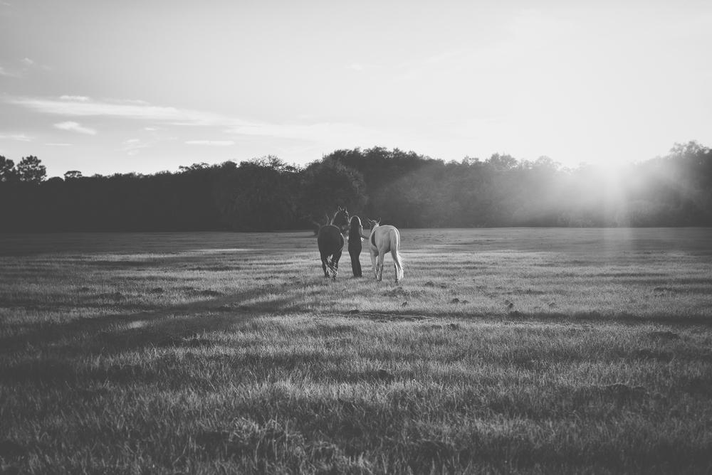 Horses-Portraits-45.jpg
