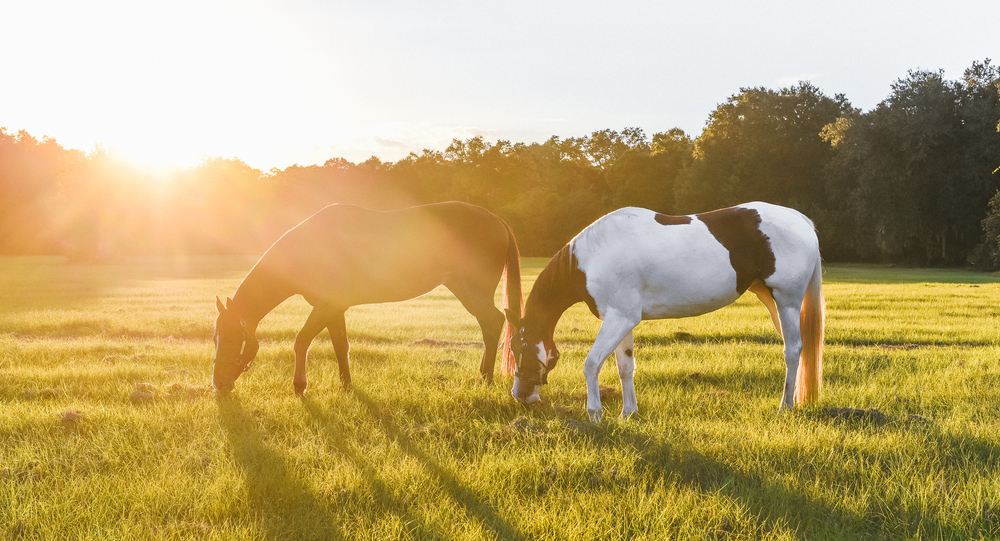 Horses-Portraits-44.jpg