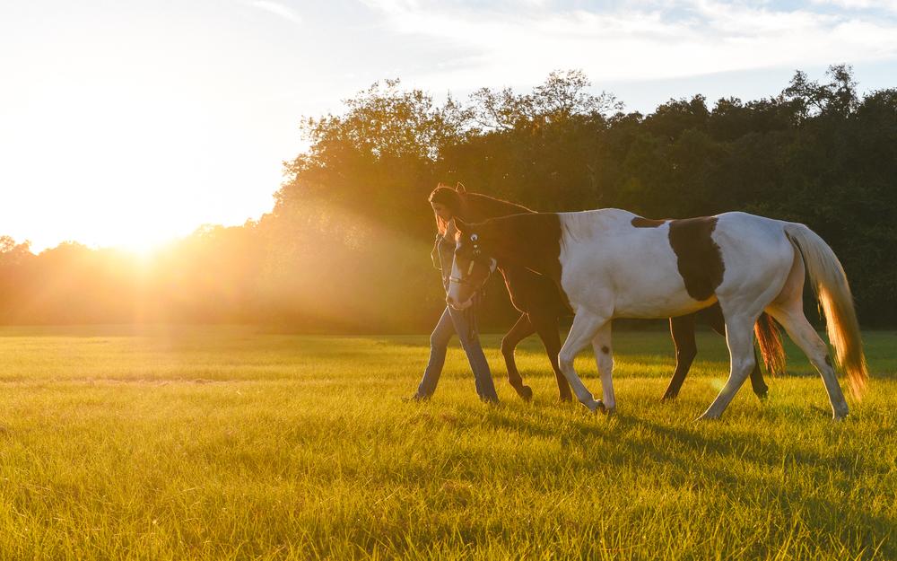 Horses-Portraits-43.jpg