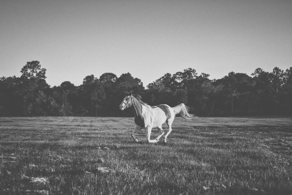 Horses-Portraits-42.jpg