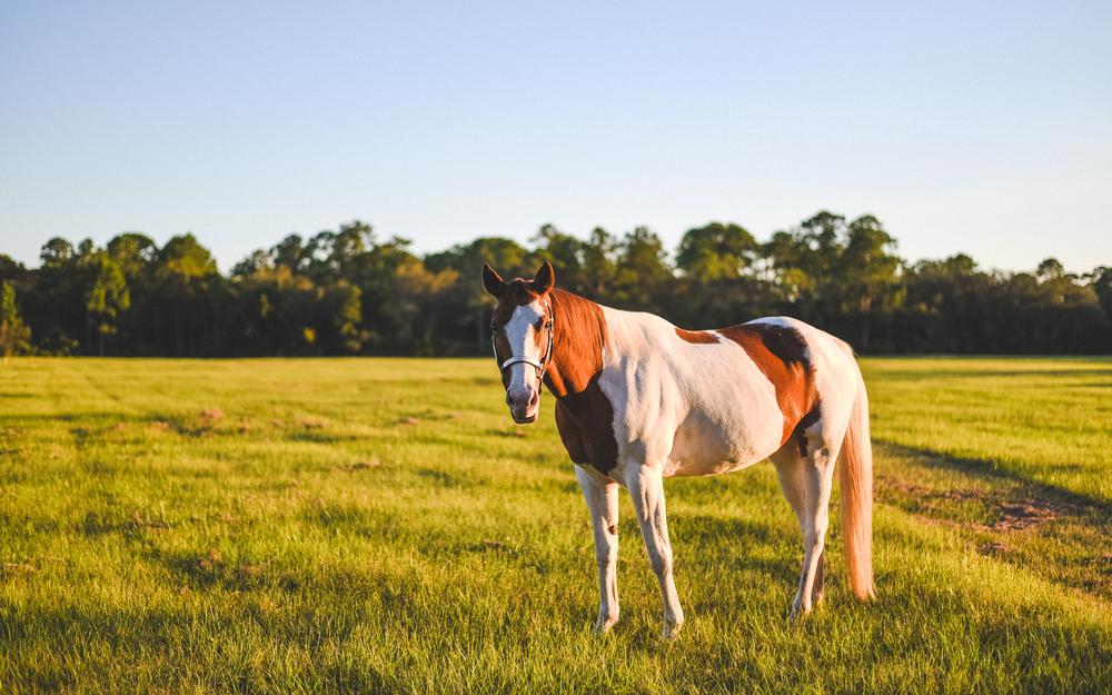 Horses-Portraits-41.jpg