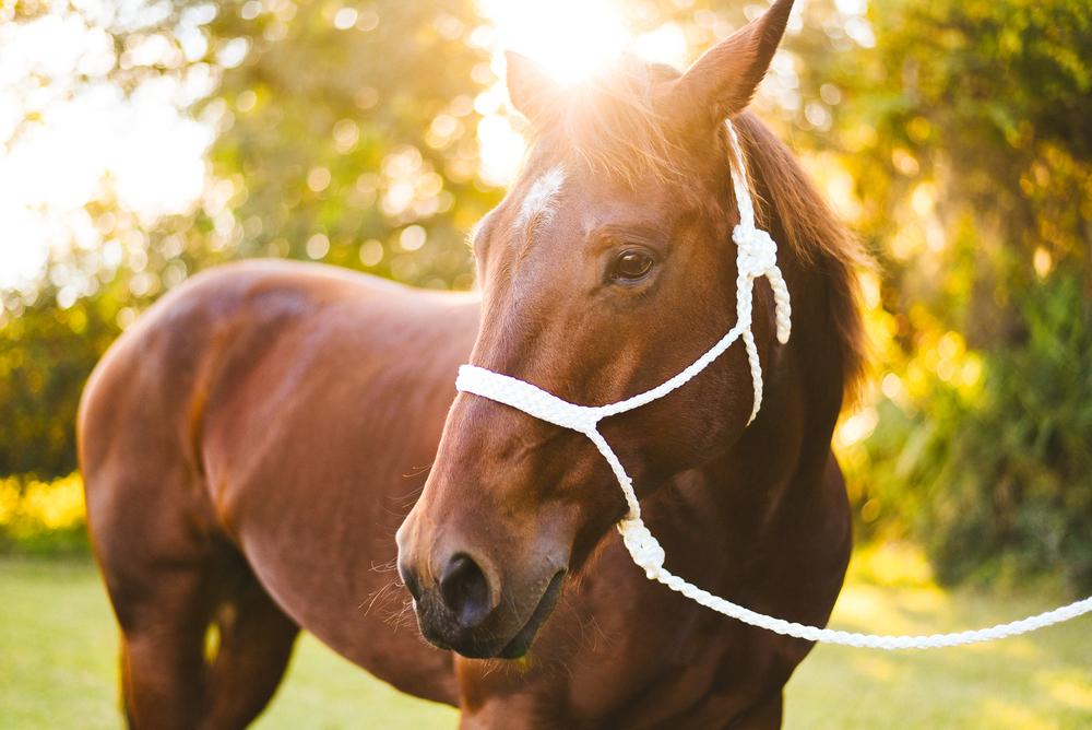 Horses-Portraits-23.jpg