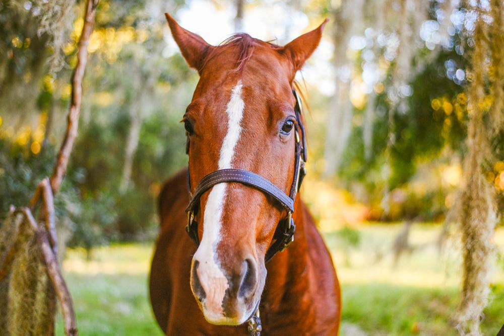 Horses-Portraits-3.jpg