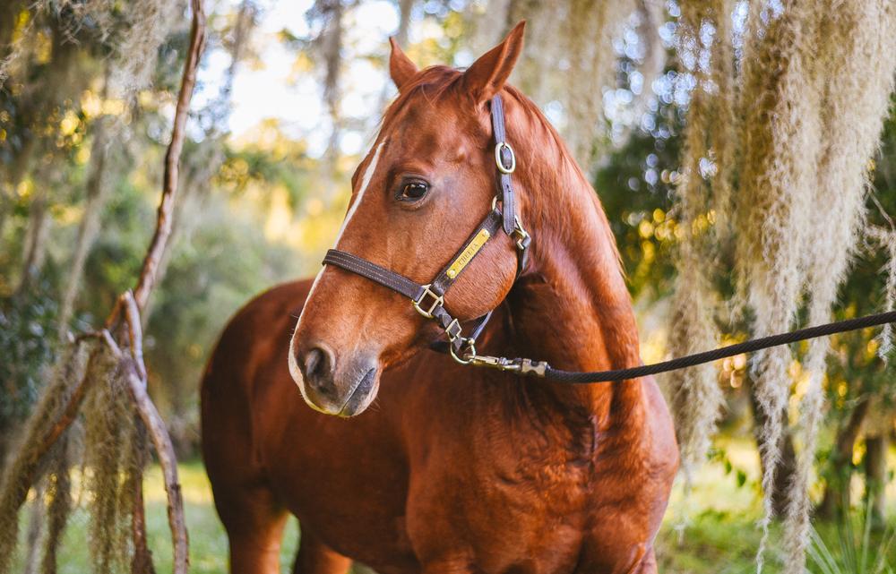 Horses-Portraits-4.jpg