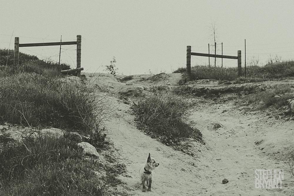 stephen bryant california photographer