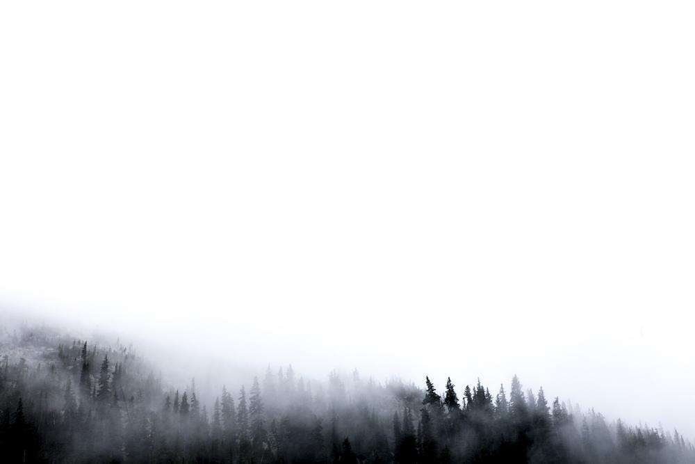 colorado_foggy_pines_blog-1.jpg