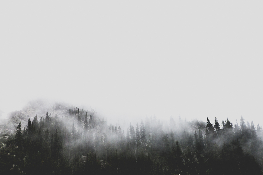 colorado_foggy_pines_blog-2.jpg