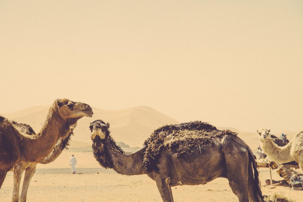 morocco_camel_travel-1.jpg