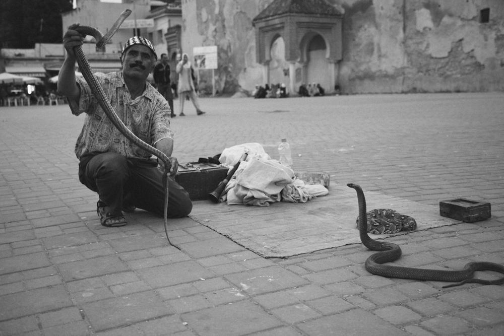 morocco_snakes_blog-1.jpg