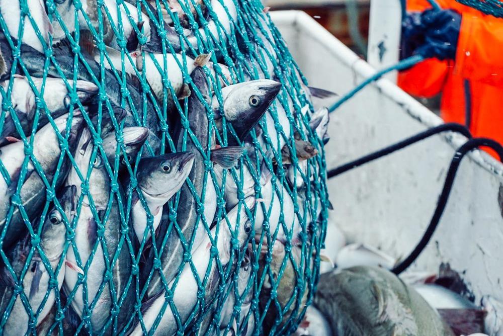 fisherman_story_blog-12.jpg