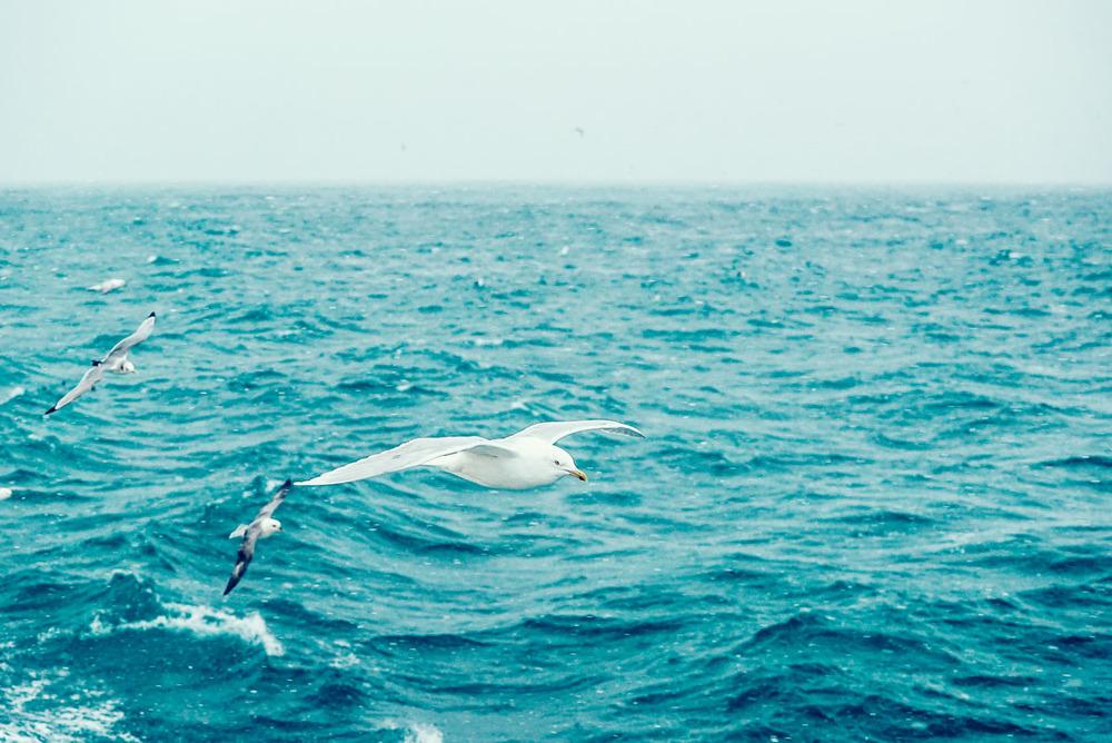 fisherman_story_blog-13.jpg