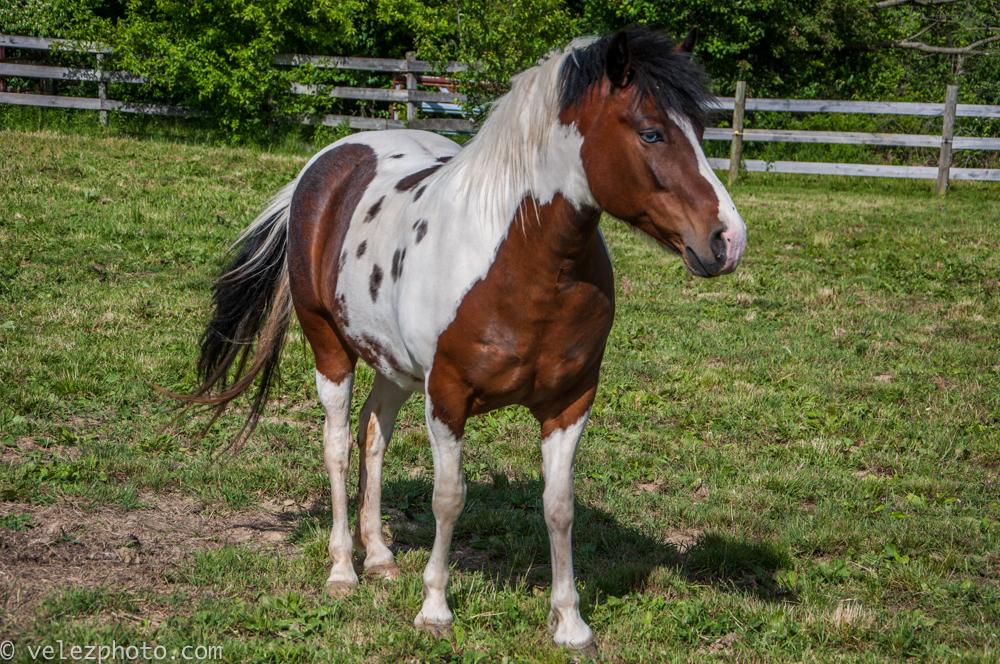 Horse-100.jpg