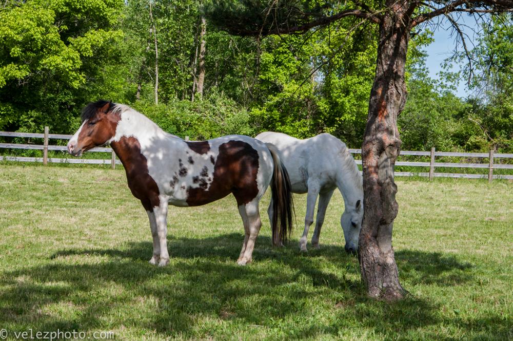 Horse-102.jpg