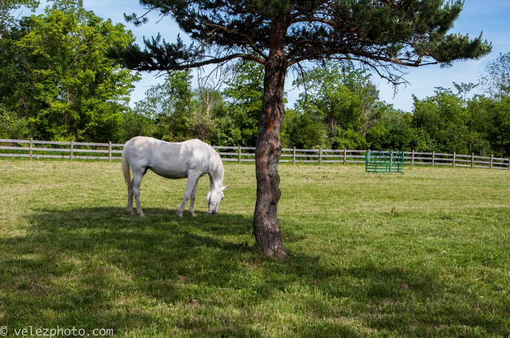 Horse-103.jpg