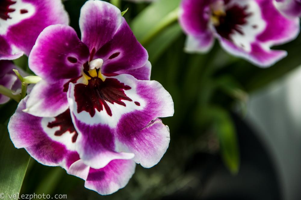 Flowers-103.jpg