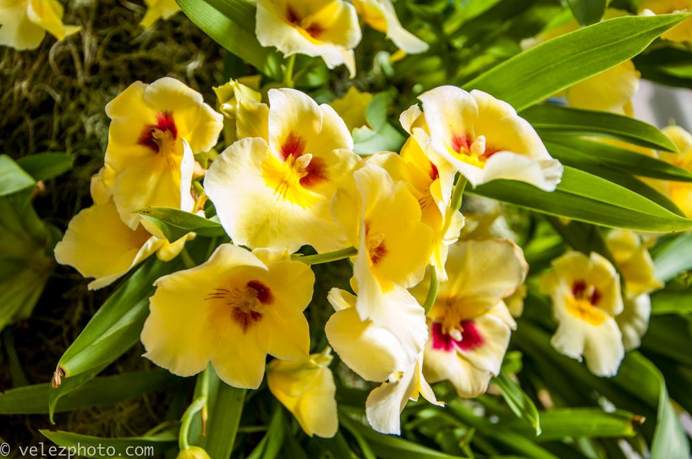 Flowers-104.jpg
