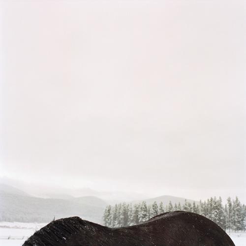 plumb_horseback.jpg