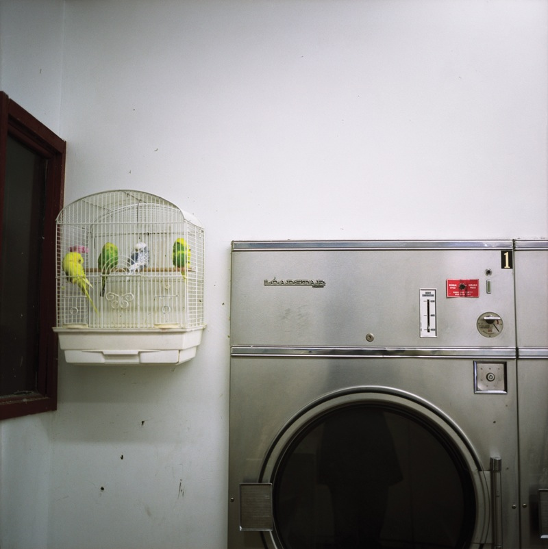 Laundromat  by Colleen Plumb | Digital C-Print