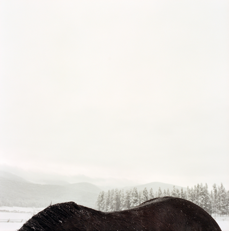 Horseback  by Colleen Plumb | Digital C-Print
