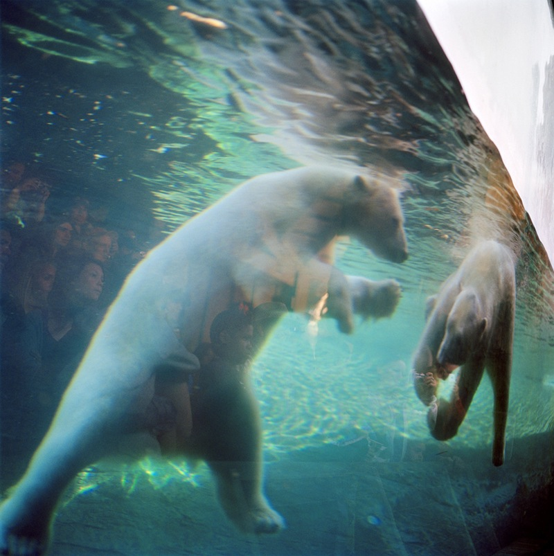 Polar Bears  by Colleen Plumb | Digital C-Print