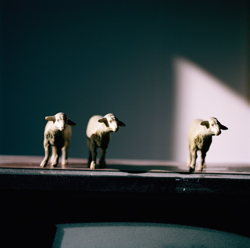 Sheep Trinity  by Colleen Plumb | Digital C-Print