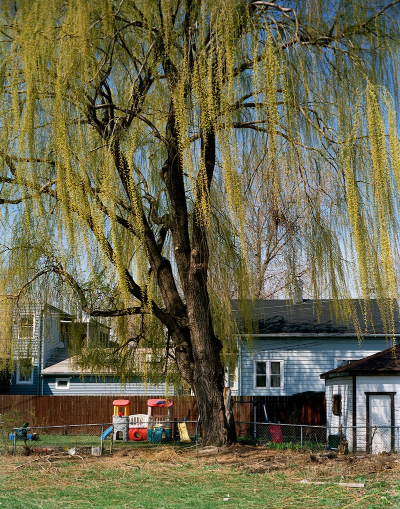 Willow Tree  by Colleen Plumb | Digital C-Print