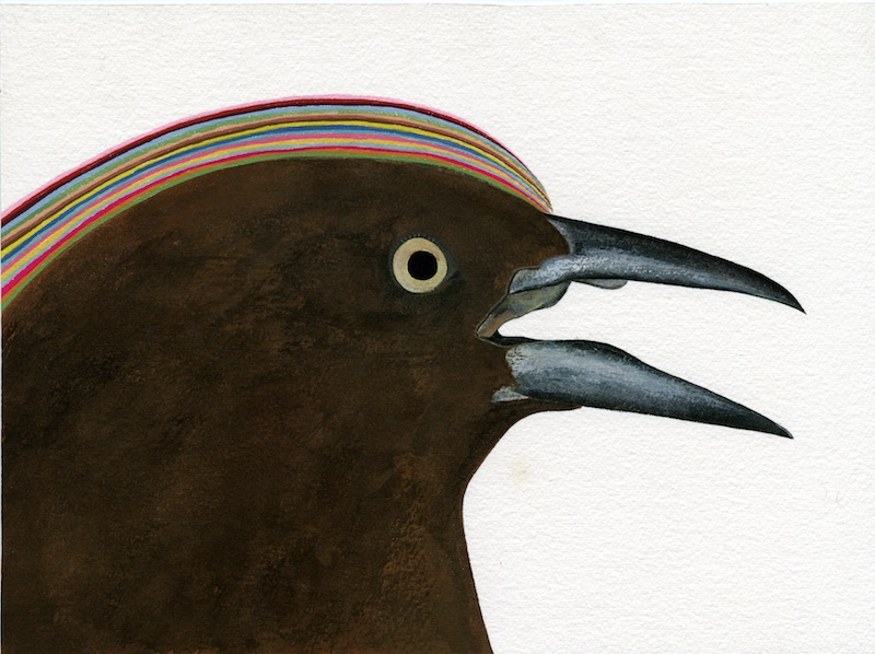 Female Grackle  by Carrie Marill | Gouache on Paper
