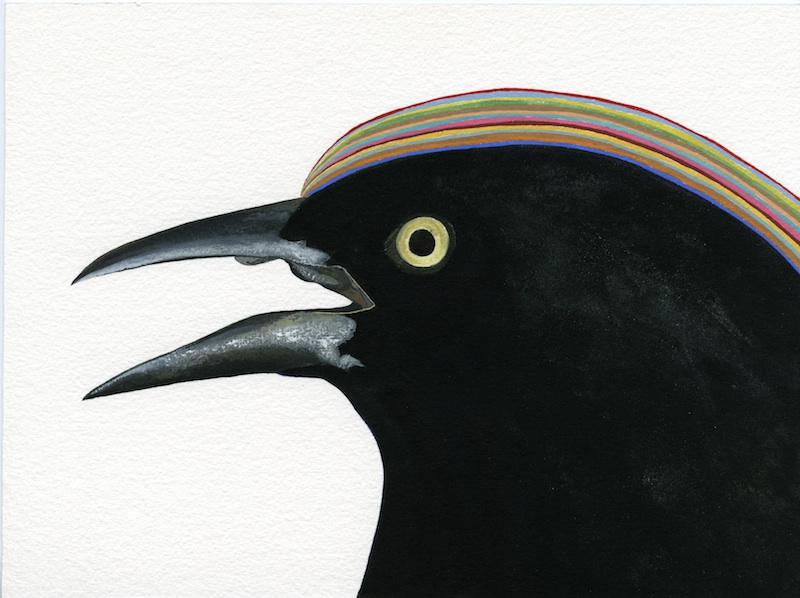 Male Grackle  by Carrie Marill | Gouache on Paper