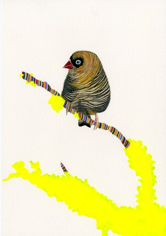 Fire Tail Finch  by Carrie Marill | Gouache on Paper