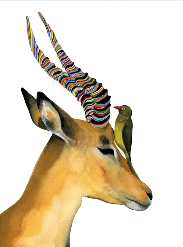 Red Billed Ox Pecker With Impala  by Carrie Marill | Gouache on Paper