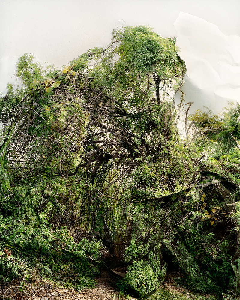 Response to Print of Shrub with Doves, Florida, 2006   by Laura Plageman | Archival Pigment Print