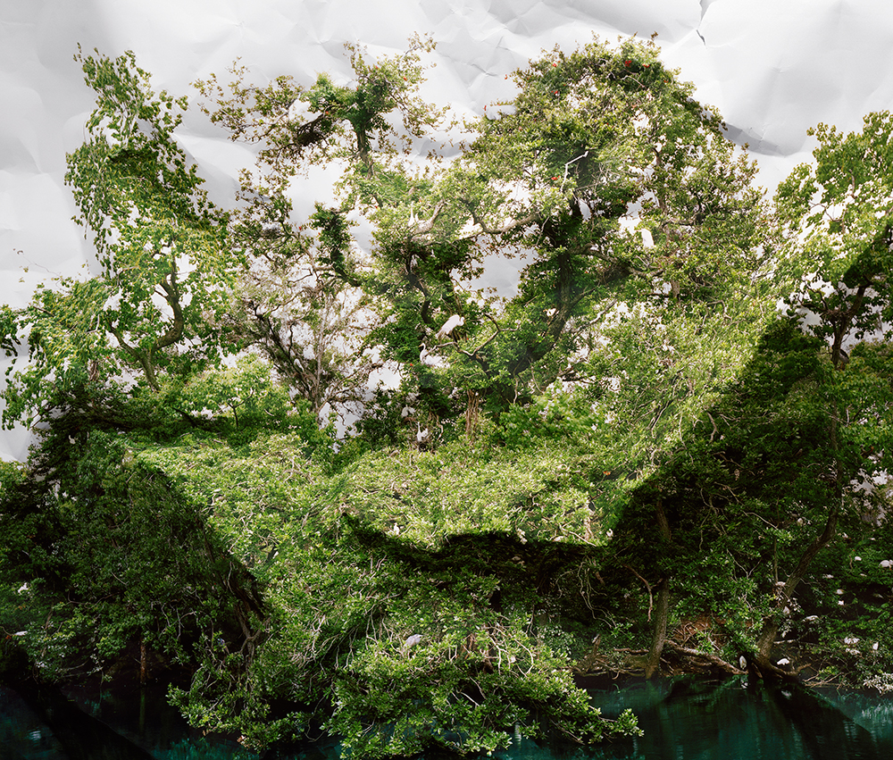 Response to Print of Egret Rookery, Louisiana, 2010   by Laura Plageman | Archival Pigment Print